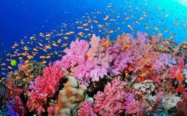 Các rặng san hô đỏ hồng được dùng làm tên gọi cho loại màu này