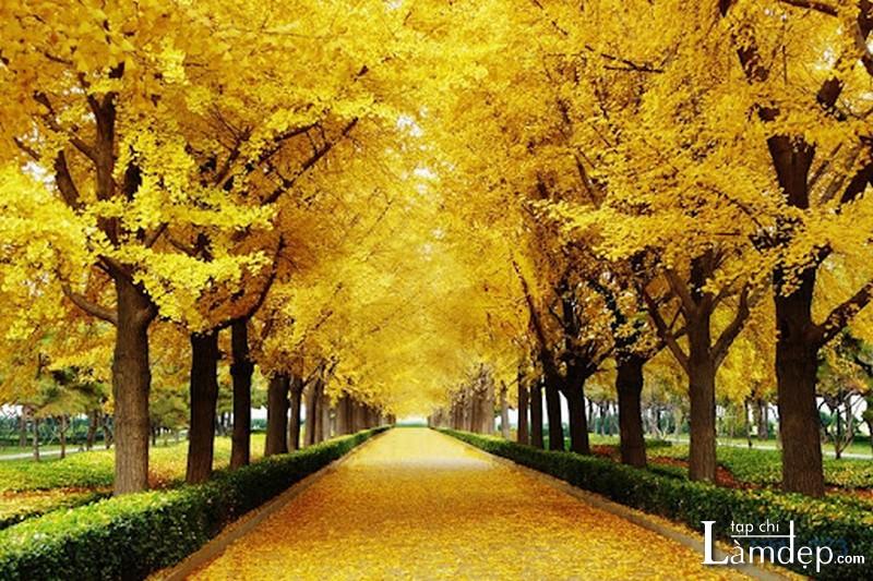 Tranh đính đá phong cảnh mùa thu
